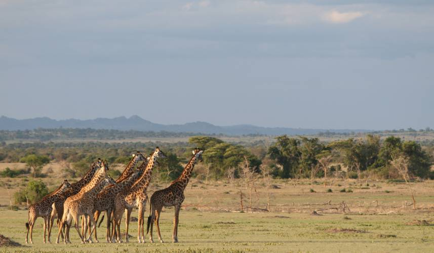 Steve's Top 5 Packing Tips for a Safari to Tanzania