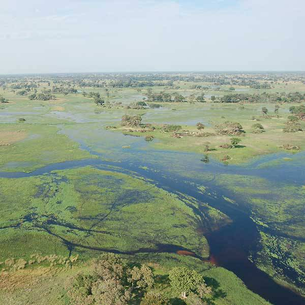 Steve's Off the Beaten Track Safaris:<br> #3 Okavango Explorations
