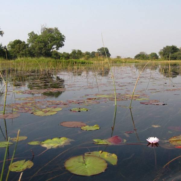 VIRTUAL EXPEDITION: The Okavango Delta