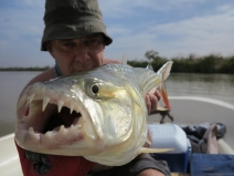 Tigerfish tours
