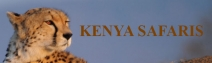 Kenya Safaris