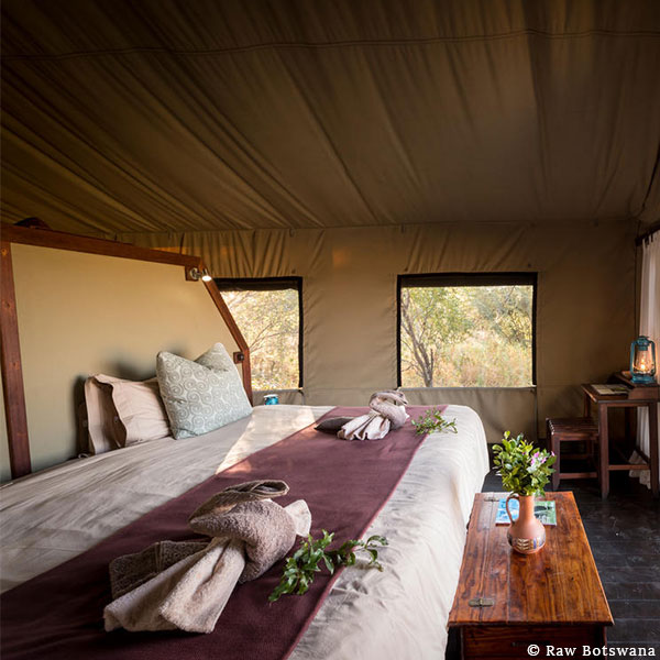 Interior of a luxury safari tent with a bed, desk with a hurricane lamp, and bush through the windows at Raw Botswana