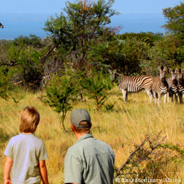 A man in a cap and a boy looking at a small herd of zebra while on safari with Extraordinary Africa