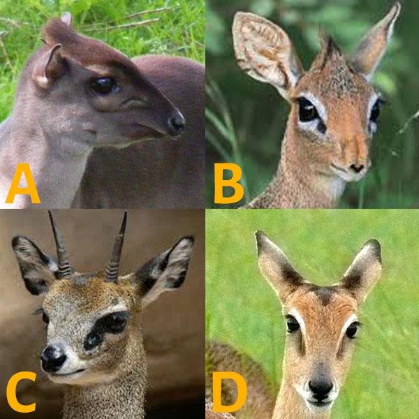 Friday Safari Quiz