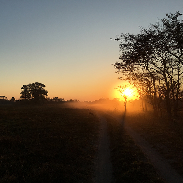 A sunrise over a dusty road in Kafue National Park Zambia with silhouetted trees and brown grass