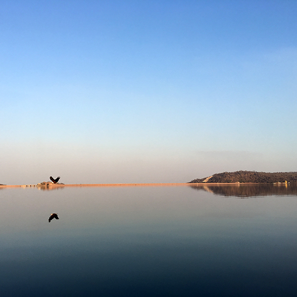 A fish eagle flies over the Kafue River and is reflected in the still blue water