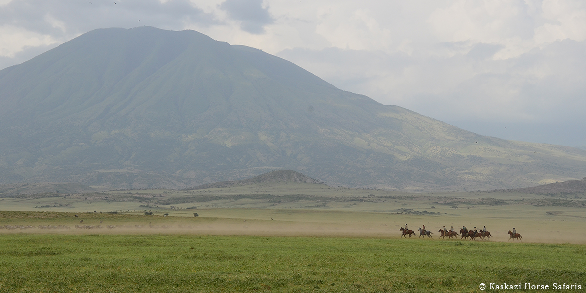 Riders galloping across a plain with a herd of wildebeest on a horse safari in Tanzania on the Kilimanjaro Elephant ride