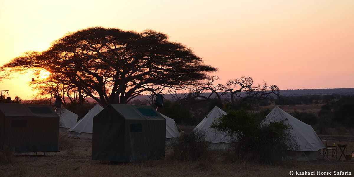 Silhouette of a tree at sunrise with mobile safari tents and bucket showers overlooking the bush on horse safari in Tanzania