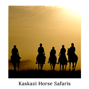 Silhouette of a group of horse-riders riding in the dust and orange sunlight on a horse safari with Kaskazi in Tanzania
