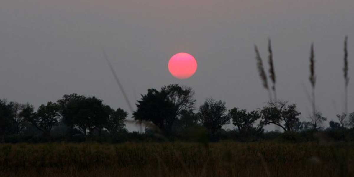 A sunset in Africa with a large pink sun setting over the savanna