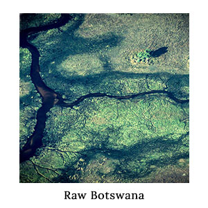 A satellite aerial view of the waterways, channels, hippo paths, and green wilderness of the Okavango Delta in Botswana