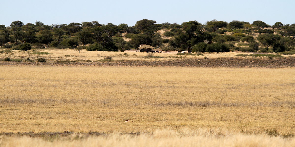 View of an isolated campsite in the Kgalagadi Transfrontier Park Botswana surrounded by dry savannah grass and green trees