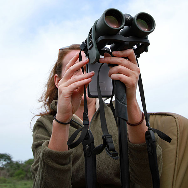 A woman using an iPhone adapter with Swarovski EL 10x42 binoculars to take photos on safari in Thanda Game Reserve.