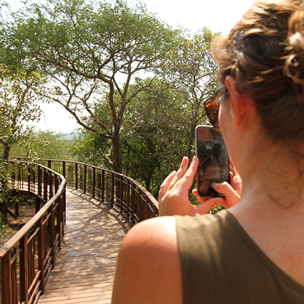 A woman wearing sunglasses uses her iPhone to take a photo of a wooden walkways at Thanda Tented Camp.