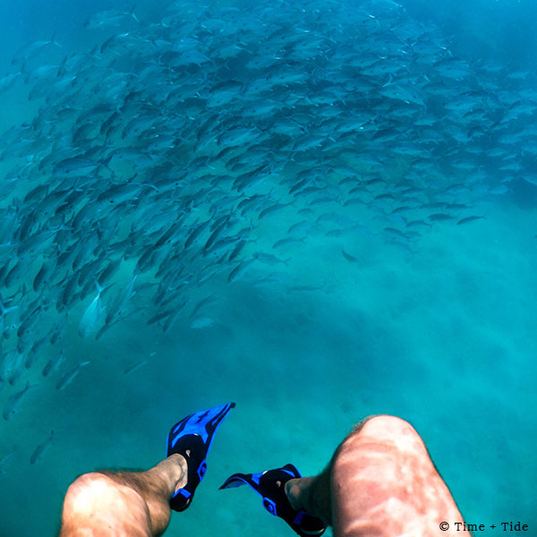 Man's legs and flippers with a shoal of fish in blue water while snorkelling at Time + Tide Miavana, Nosy Ankao, Madagascar