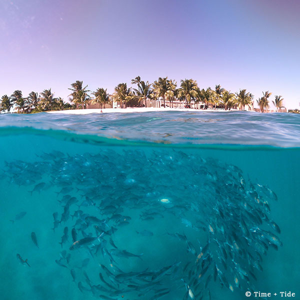 Palm-lined beach and lodge with underwater view of clear, blue water with fish swimming in a circle at Time + Tide, Miavana