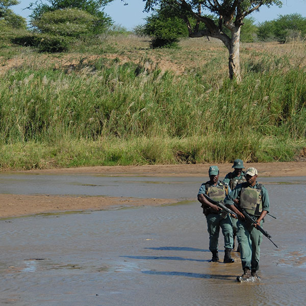 A group of armed anti-poaching men patrol through a riverbed in Hluhluwe-iMfolozi