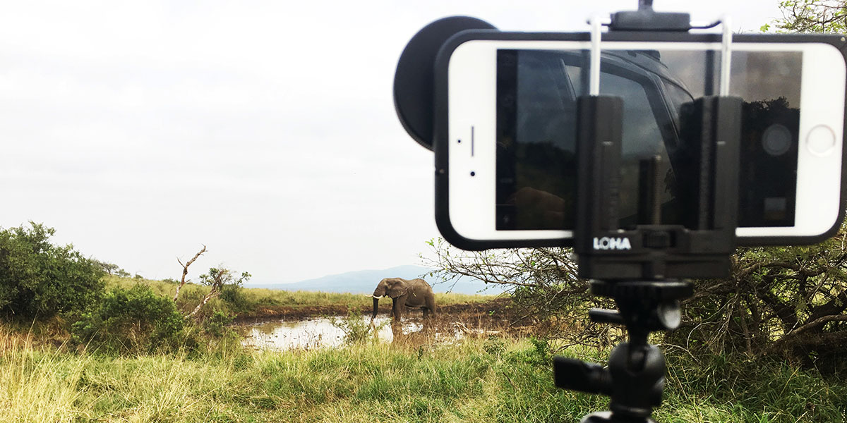 An iPhone 6 smartphone mounted on a Loha tripod points at an elephant standing next to a waterhole.