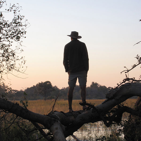 A man in a safari hat stands on tree branch looking out of the Okavango Delta in Botswana