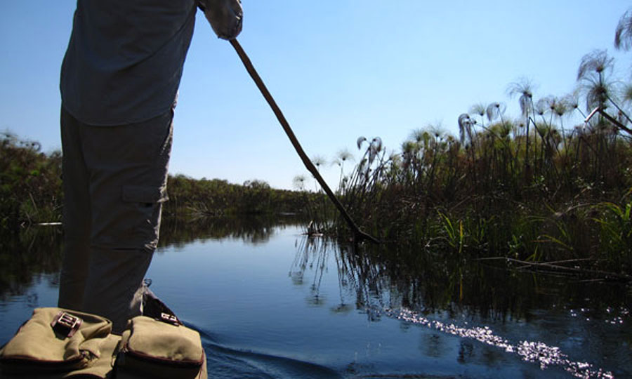 Papyrus and mokoro Okavango Delta