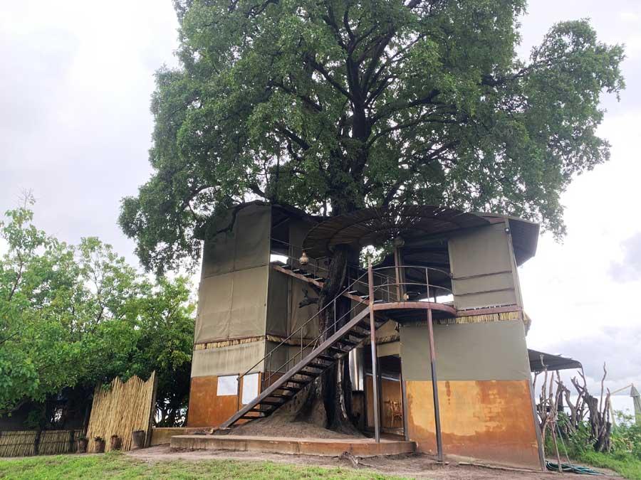 Jackalberry Camp - Tower built around Jackalberry tree, Nkasa Rupara, Namibia