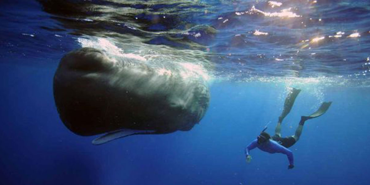 Steve Backshall swimming with a sperm whale on BBC's Super Giant Animals wearing flippers, a blue vest and diving goggles
