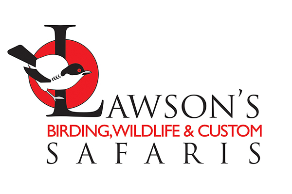 Lawson's Birding